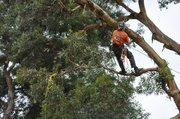 A competitor scales a tree during last weekend&#39;s 9th Annual Climbing Invitational held at Chase Palm Park