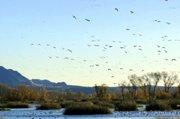 Gray Lodge Wildlife Area
