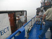 White seabass fingerlings are transported to their pen