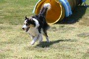 Dog Agility Trial