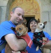 Chihuahuas at the Santa Barbara Courthouse as part of the Whole Enchihuahua program (May 5, 2012)