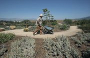 Native drought-tolerant landscapes.