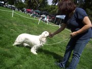Jan Sutherland and Mimi the Clumber Spaniel