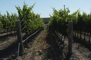 Jonata Vineyards