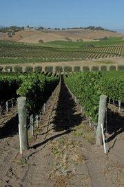 Jonata Vineyards