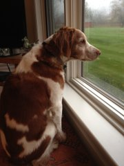 Rosie looking out the window as the hurricane quickens.