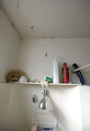 A water leak in the bathroom of a Dario Pini apartment causes the paint to buckle and mold to grow. (Dec. 12, 2012)