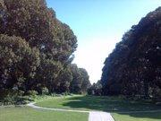 Rancho Dos Pueblos Casa Grande Garden's famous Moreton Bay fig trees.