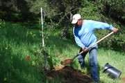 Valle Verde Plants 150 Oak Trees on Campus.