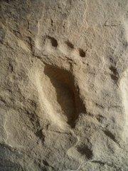 Bear paw petroglyph