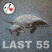 Last 55 poster