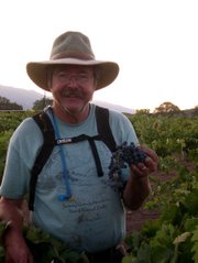 Steve Gliessman inspecting the fruit during the 2008 harvest