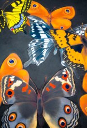 "Section of I Madonnari painting ""Butterflies"" at the Mission in 2007 by Ann Hefferman."