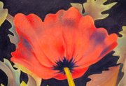 Closeup of a poppy from a painting by Ann Hefferman in 2008.