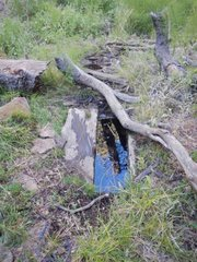 McGuire Spring has suffered from years of drought.