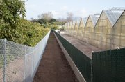 Trail is fenced through the nursery and orchard areas.