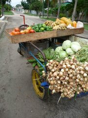 Cuba's lack of petroleum means a need for bicycle transport and food raised using permaculture methods.