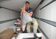 <b>DIG IN:</b>  Contrary to widespread rumors, the latest scientific research shows that there is no evidence suggesting that Pacific fish, like this 46-pound opah held by Dennis Soto from the Santa Barbara Fish Market, have been made inedible by Fukushima radiation. In fact, even fish caught in Japanese waters are showing markedly reduced and, in many cases, safe radiation levels.