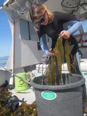 "<b>COAST GUARD:</b>  Jenna Driscoll, Watershed and Marine Programs associate at ChannelKeeper, takes collections near Butterfly Beach for radiation tests as part of the Kelp Watch program. ""So far, there is just no evidence to suggest that we have anything to worry about,"" she said."