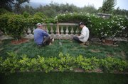 A landscaping crew works to put in drip irrigation and native plants at the Reiche estate.