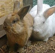 Reese and Petunia