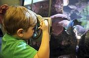 Cade Harrington gets an up-close look of aquatic life.