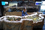 Sea Center volunteer Katelin Seeto at a redesigned touch tank.