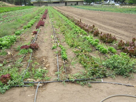 Drip irrigation to conserve water already went into farms like Fairview Gardens, and with increasing water prices, farmers are faced with a new hurdle.