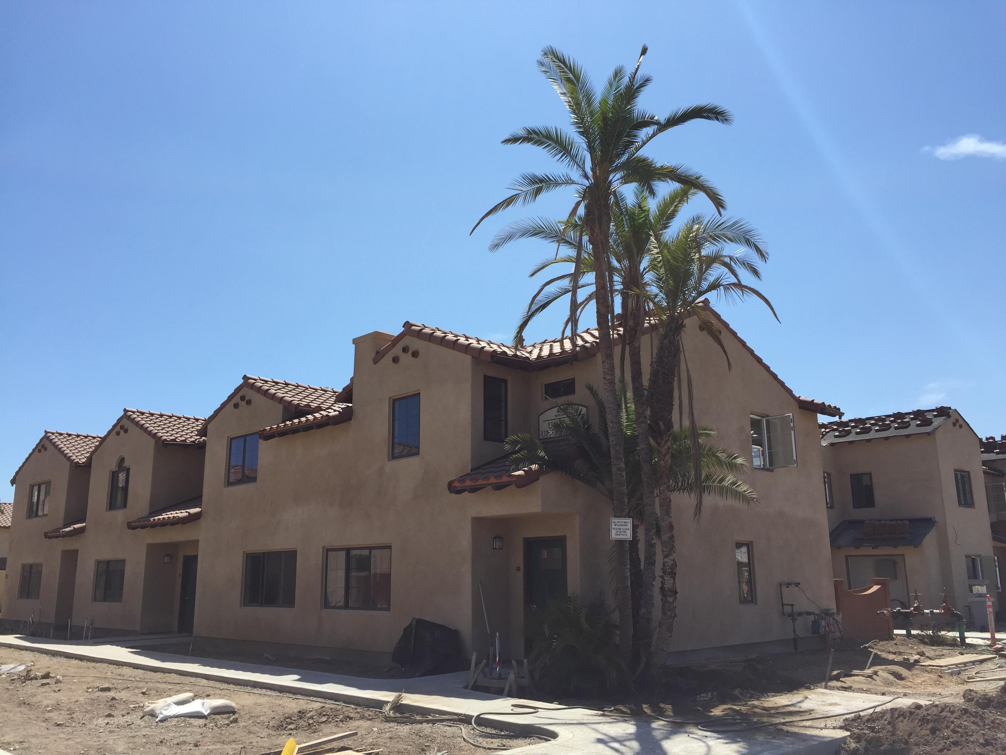 Decades old carpinteria palms replanted at affordable - Carpinteria casas ...
