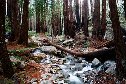 The fresh waters of a redwood grove make the perfect tonic to Black Friday.