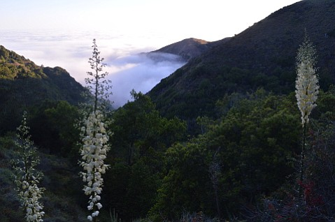 Fog shrouds the Big Sur coast, as seen from Salmon Creek Trail.