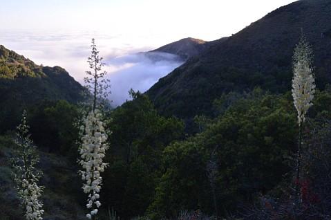 Fog shrouds the Big Sur coast, as seen from Salmon Creek Trail.