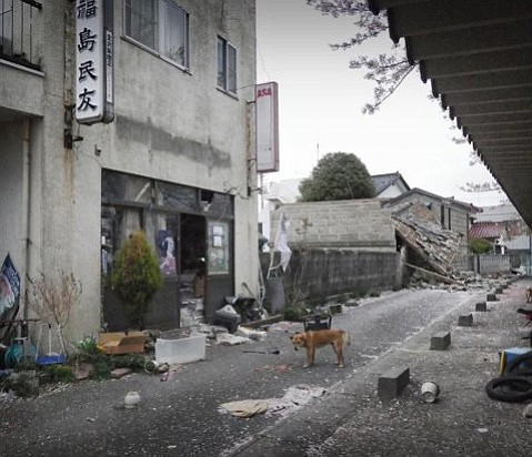 The evacuation of the town of Fukushima when the nuclear plant began to melt down left pets and farm animals behind.