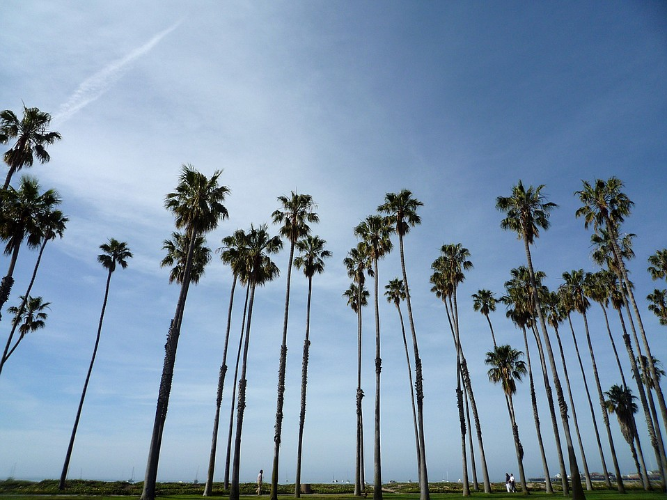 Not too many moons ago, Santa Barbara was home to many offbeat characters, among them the Standing Man, who was mesmerized by palm trees.