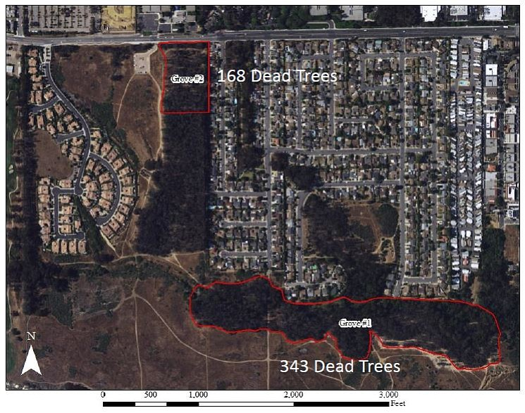 About a tenth of the trees in Goleta's butterfly forests are dead, endangering not only the monarch habitat but also the public who flock to visit them.