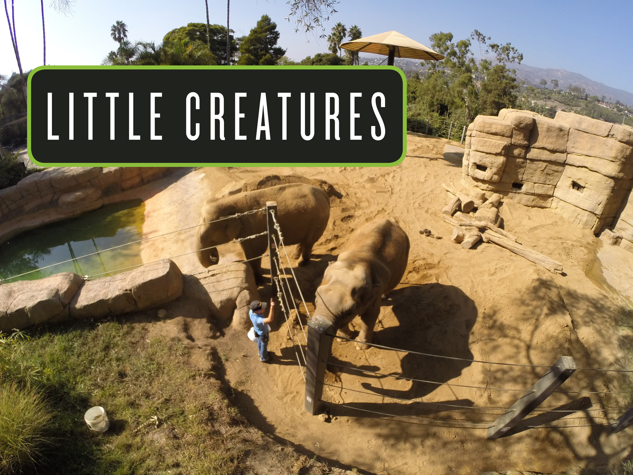 Best of Santa Barbara® 2017: Little Creatures